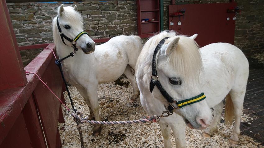 Becky Miles – Pony trekking on Ireland Moor